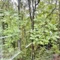 107 Treetop Ct - Photo 42