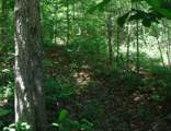 7 .53 Ac. Big Piney Loop - Photo 11