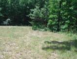 7 .53 Ac. Big Piney Loop - Photo 13
