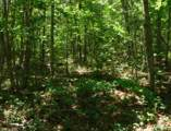 7 .53 Ac. Big Piney Loop - Photo 3