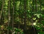 7 .53 Ac. Big Piney Loop - Photo 10