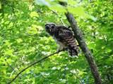 49 Featherfoot Pkwy Loop - Photo 14
