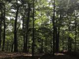 1034 Holly Tree Gap Rd - Photo 3