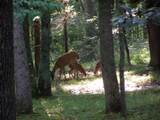 4365 Chapel Hill Rd - Photo 11