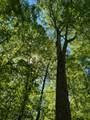 119 Blue Creek Ln - Photo 13