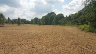 23 Newtown Rd, Rockvale, TN 37153 (MLS #1821400) :: John Jones Real Estate LLC