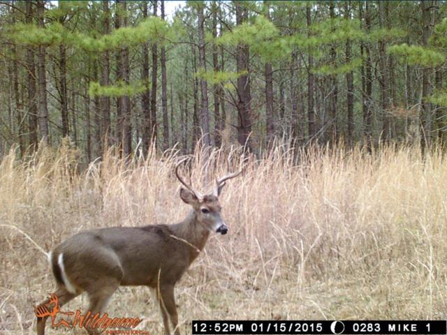 0 Hickory Trace, Lyles, TN 37098 (MLS #1972778) :: John Jones Real Estate LLC