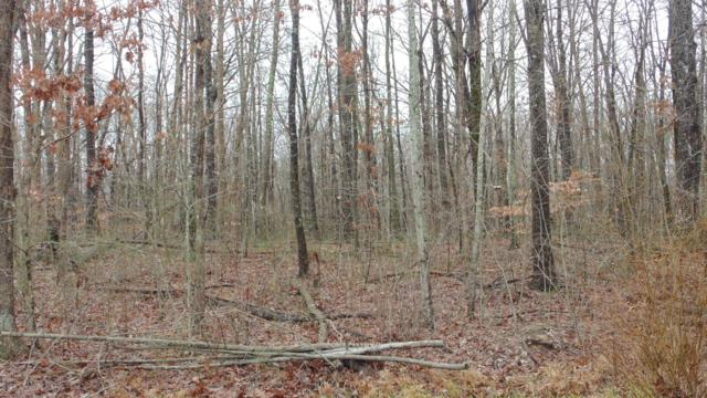0 Mountain Shadows, Monteagle, TN 37356 (MLS #1999553) :: REMAX Elite