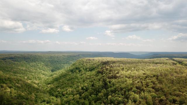 17 Old Falls Trail, Monteagle, TN 37356 (MLS #RTC2003006) :: REMAX Elite