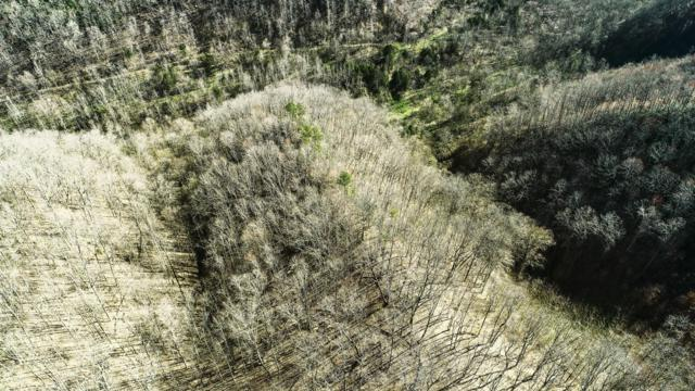 278 Coconut Ridge Rd, Smithville, TN 37166 (MLS #2030982) :: John Jones Real Estate LLC