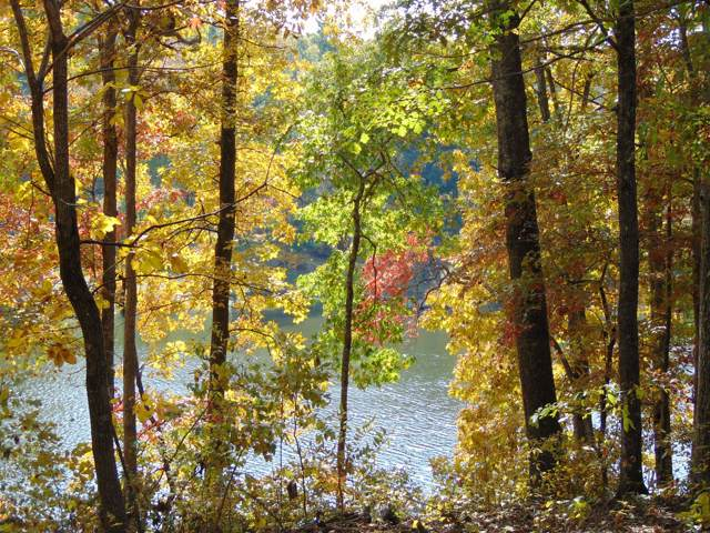 0 Pine Lake Rd, Lot #42, Summertown, TN 38483 (MLS #RTC1986502) :: PARKS