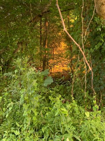3575 Hampshire Pike, Mount Pleasant, TN 38474 (MLS #RTC2046837) :: HALO Realty