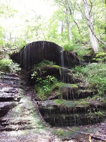 3482 Waterfall Creek Rd, Collinwood, TN 38450 (MLS #RTC2063689) :: REMAX Elite