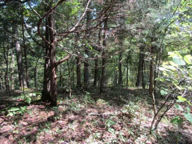 5 .015Ac  Backwoods Trails, Celina, TN 38551 (MLS #RTC2079662) :: The Group Campbell powered by Five Doors Network