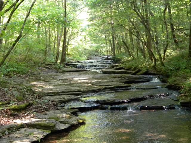 0A Little Swan Creek Rd, Hohenwald, TN 38462 (MLS #RTC2080706) :: Nashville on the Move