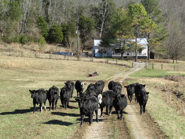 2701 Yell Rd, Lewisburg, TN 37091 (MLS #RTC2111797) :: Village Real Estate