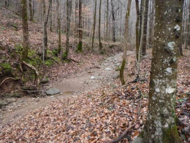 72 .71Ac Hinds Chapel Rd, Jamestown, TN 38556 (MLS #RTC2116404) :: Village Real Estate