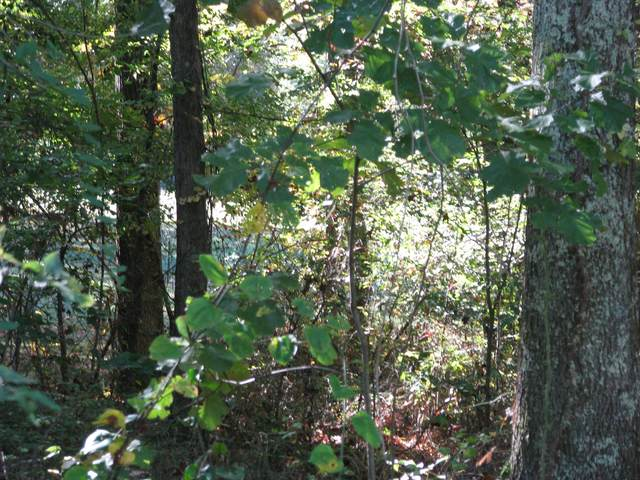 0 Hargis Rd, Mc Ewen, TN 37101 (MLS #RTC2197952) :: Village Real Estate