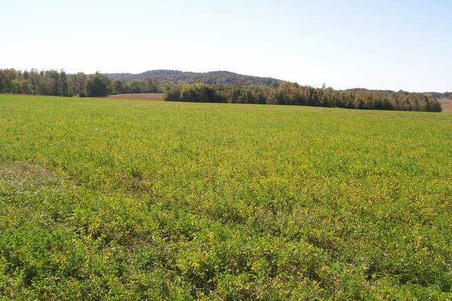 840 Horton Rd, Quebeck, TN 38579 (MLS #RTC2201550) :: Maples Realty and Auction Co.