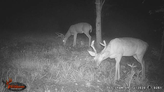 2 New Era Bluff Rd, Linden, TN 37096 (MLS #RTC2252889) :: The Adams Group