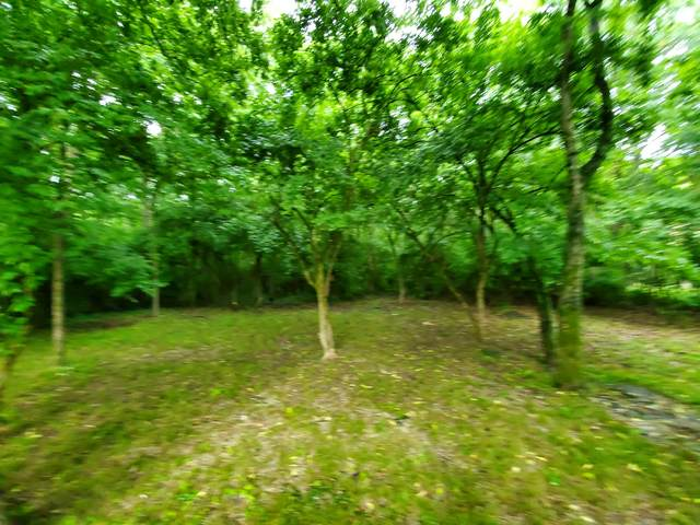 0 Ward Rd Lot 46, Madison, TN 37115 (MLS #RTC2261841) :: Maples Realty and Auction Co.