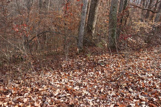 56B Holiday Haven Rd, Smithville, TN 37166 (MLS #RTC2262826) :: Village Real Estate