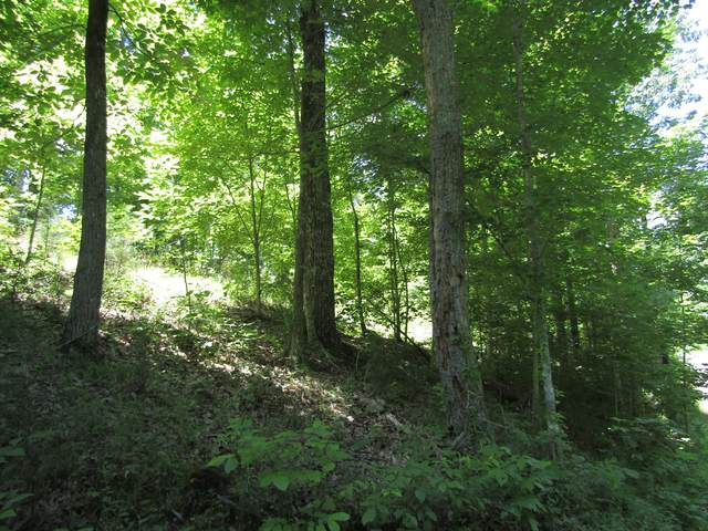 4 Simple Life Road, Hilham, TN 38568 (MLS #RTC2264324) :: HALO Realty