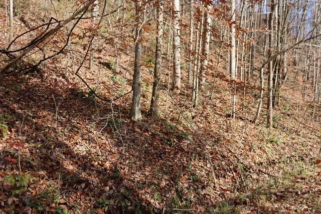 0 Cherokee Dr, Smithville, TN 37166 (MLS #RTC2296203) :: John Jones Real Estate LLC