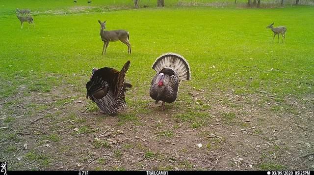 0 Union Hollow Rd, Petersburg, TN 37144 (MLS #RTC2299056) :: The Huffaker Group of Keller Williams