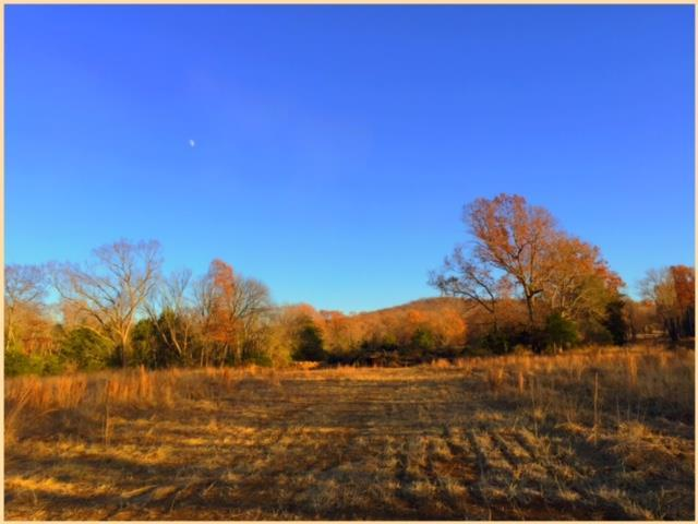 2646 Sanford Road *Lot #50, Nolensville, TN 37135 (MLS #1880543) :: NashvilleOnTheMove | Benchmark Realty