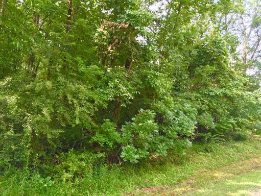 6 Laurel Lake Dr, Monteagle, TN 37356 (MLS #1906414) :: Nashville on the Move