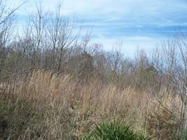 1 Dearman St, Smithville, TN 37166 (MLS #1911873) :: Ashley Claire Real Estate - Benchmark Realty