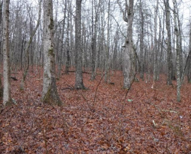 64 .36Ac Robert Haston Rd, Spencer, TN 38585 (MLS #1918641) :: EXIT Realty Bob Lamb & Associates