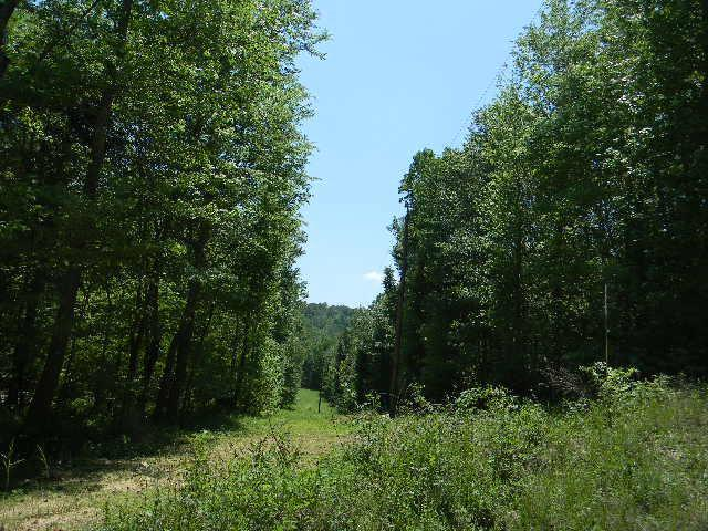 0 Roberts Creek Rd., Waverly, TN 37185 (MLS #1929426) :: The Helton Real Estate Group