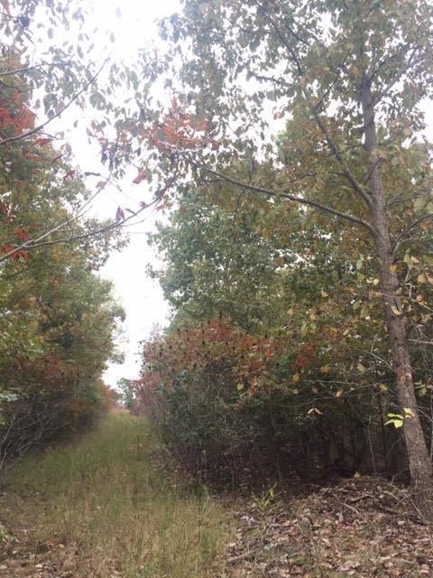 0 Nell Beard Rd, Waverly, TN 37185 (MLS #RTC1996823) :: Village Real Estate