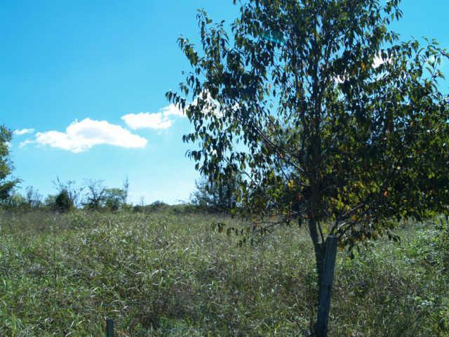 21 Old Tva Road, Columbia, TN 38401 (MLS #2003998) :: RE/MAX Homes And Estates