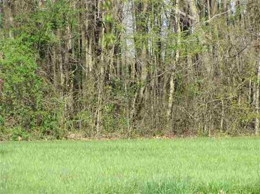 0 Cardinal Drive, Tract 3, Franklin, KY 42134 (MLS #RTC2038575) :: REMAX Elite