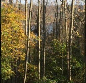 0 Sunny Point Road, Baxter, TN 38544 (MLS #RTC2005743) :: Berkshire Hathaway HomeServices Woodmont Realty