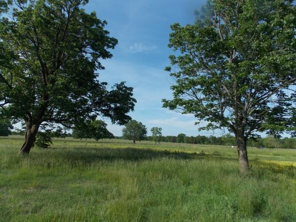 0 Unionville Deason Rd, Bell Buckle, TN 37020 (MLS #RTC2043849) :: John Jones Real Estate LLC