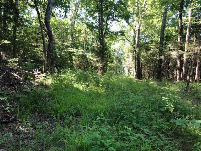 0 Robert Truelove Rd, Columbia, TN 38401 (MLS #RTC2051188) :: Village Real Estate