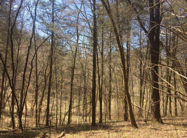719 Hunting Creek Rd, Whitleyville, TN 38588 (MLS #RTC2056354) :: REMAX Elite
