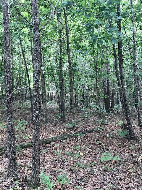 31 Aerie Lake Circle, Summertown, TN 38483 (MLS #RTC2069033) :: REMAX Elite