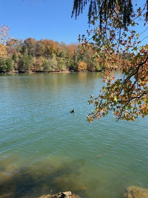 0 Grandview Lake Rd Lot 4, Estill Springs, TN 37330 (MLS #RTC2162967) :: Nashville on the Move