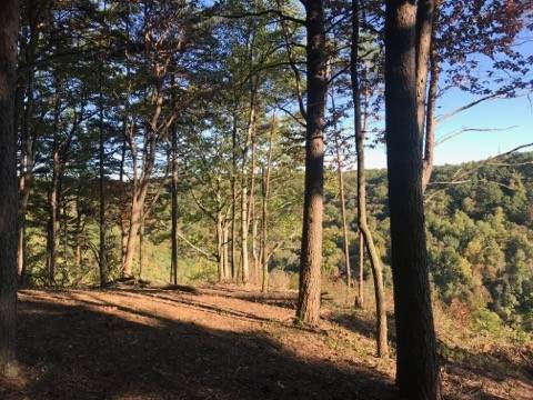 321 Timberwood Trce, Monteagle, TN 37356 (MLS #RTC2200508) :: Village Real Estate