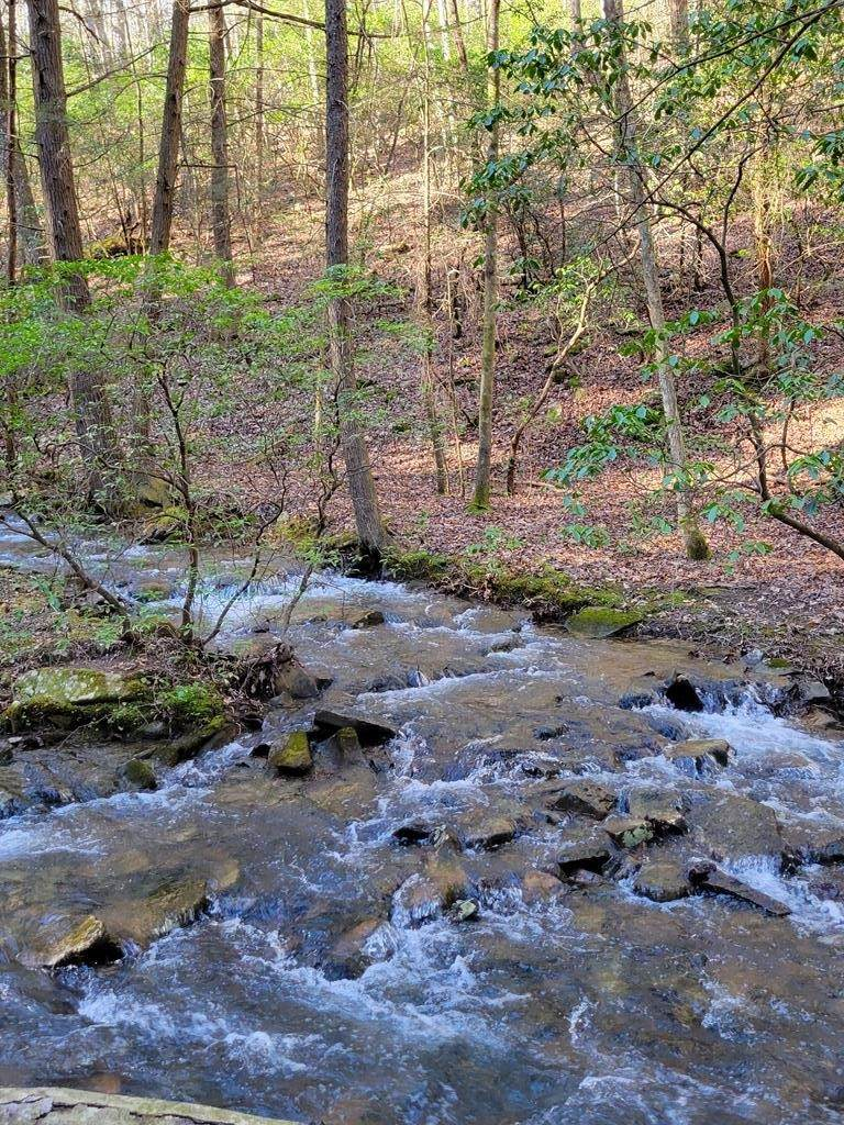 0 Tall Tree Trail - Photo 1
