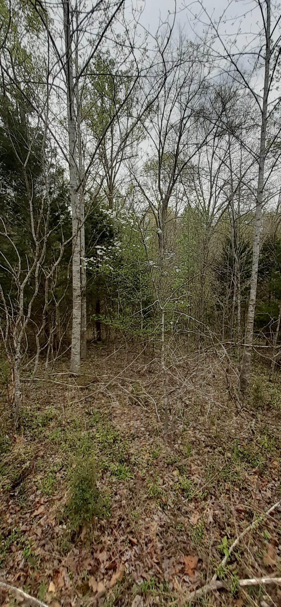 0 Rocky Point Rd. - Photo 1