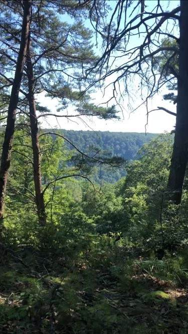 0 Eagle Point Rd, Monteagle, TN 37356 (MLS #RTC2302062) :: Movement Property Group