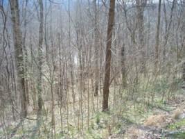6 Shoreside Dr., Smithville, TN 37166 (MLS #1620125) :: CityLiving Group