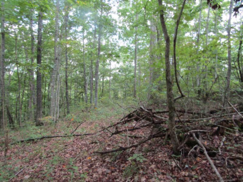 5 .017Ac Backwoods Trl - Photo 1