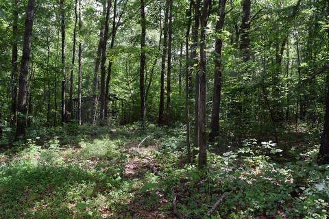 200 4th, Altamont, TN 37301 (MLS #RTC2113848) :: REMAX Elite